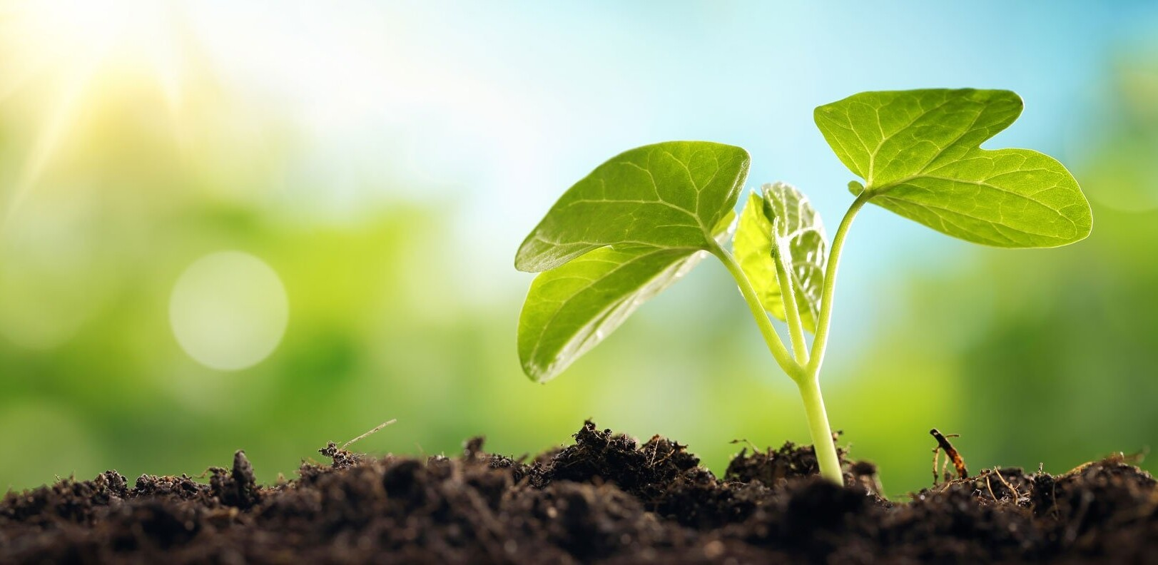 Immagine raffigurante un terreno verde con un germoglio